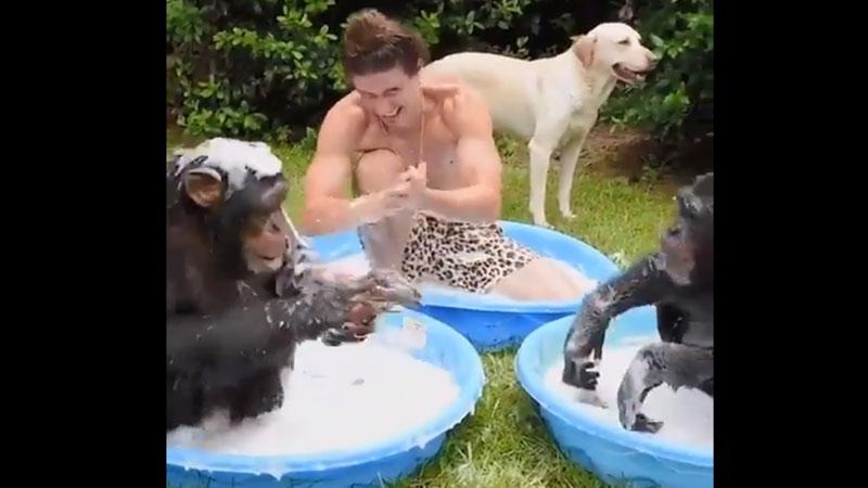 chimpanzee viral