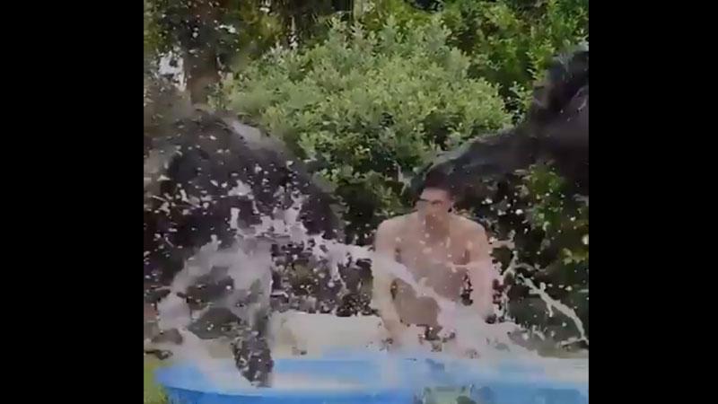 chimpanzee video viral