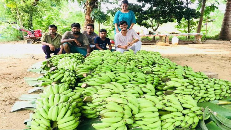 organic farming in Gujarat