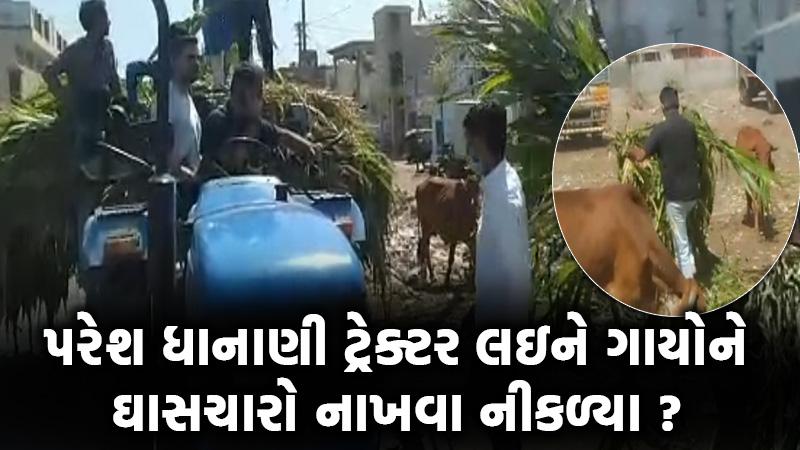 opposition leader Paresh Dhanani cattle forage amreli gujarat lockdown coronavirus