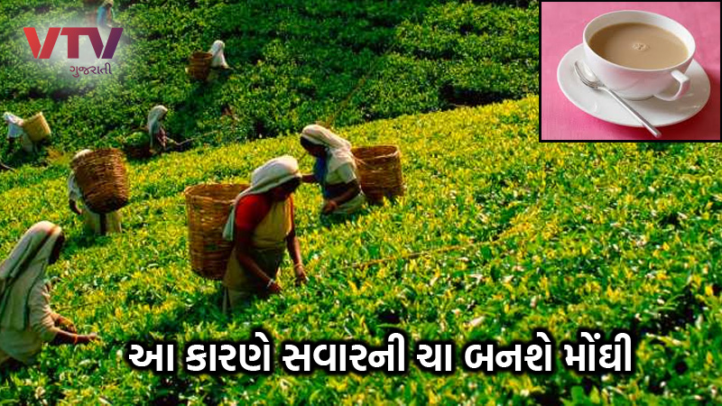damage to tea crop increased prices at auction morning cup of tea gets costlier