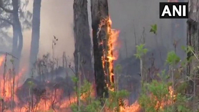 wildfire-rages-on-in-odisha-s-similipal-tiger-reserve-cm-orders-action