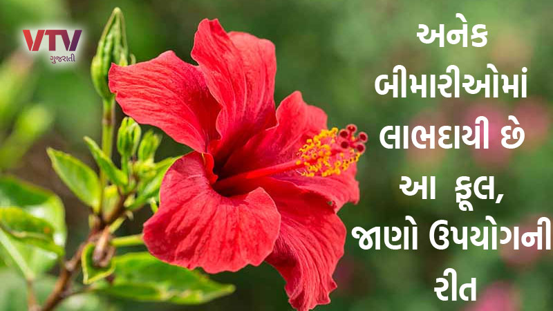 Know The Health Benefits of Hibiscus Flower