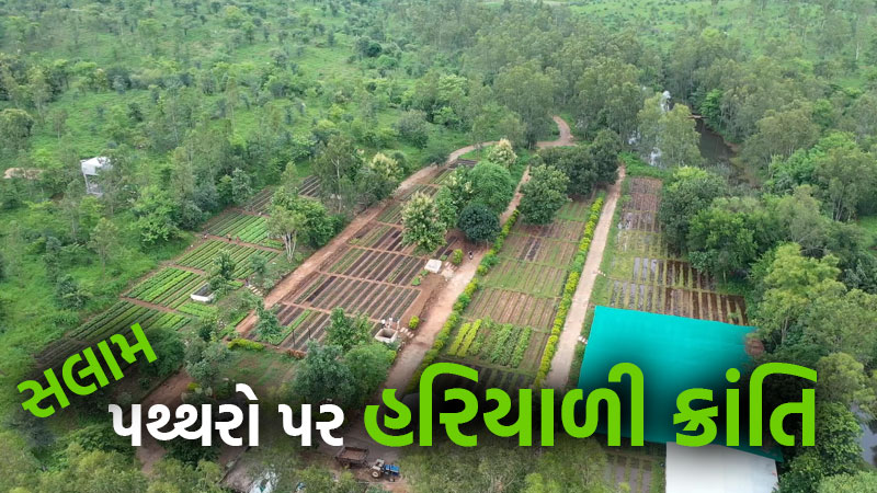 Dahod district Forest Department Great work Campa Campaign
