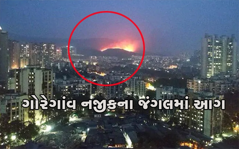 mumbai-massive-fire-engulfed-a-forested-area-of-about-four-kilometres-near-goregaon