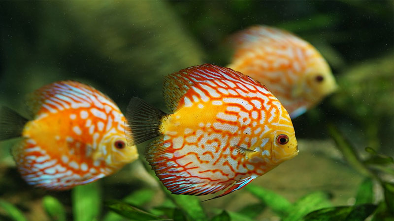 Feng Shui Tips How Fish Aquarium Keep House For Luck
