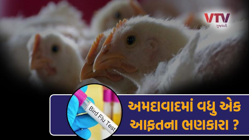 ahmedabad bird flu case