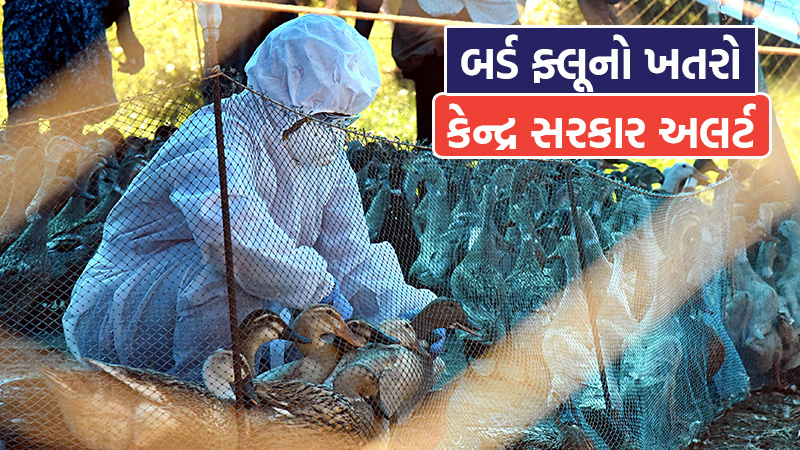 environment ministry wites letter to states on avian flu asked report bird deaths