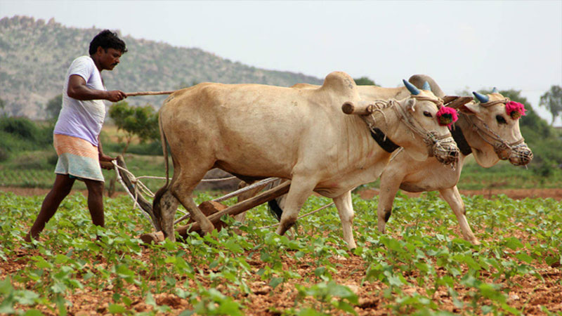 Weather and Climate Services for Farmers in India rajkot
