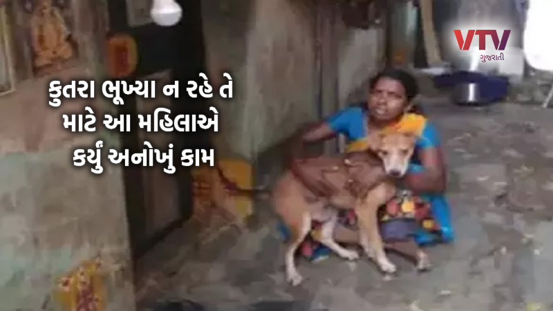 chennai woman eats once a day so her 13 dogs