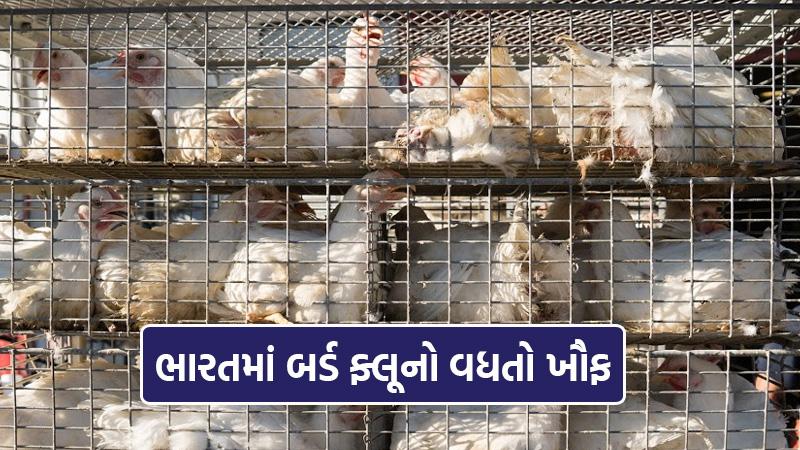 bird flu in india himachal pradesh rajasthan mp kerala haryana alert
