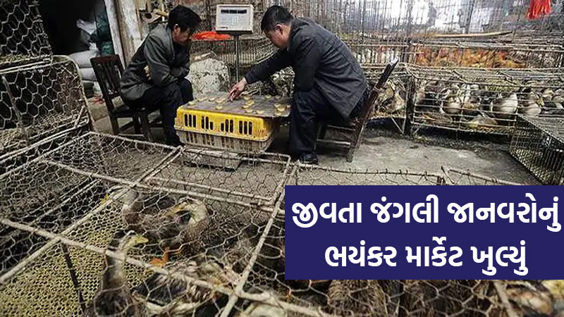 Wuhan's famous live wild animal market linked to COVID-19 reopen