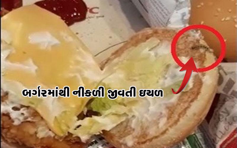 Caterpillar in burger vadodara Gujarat