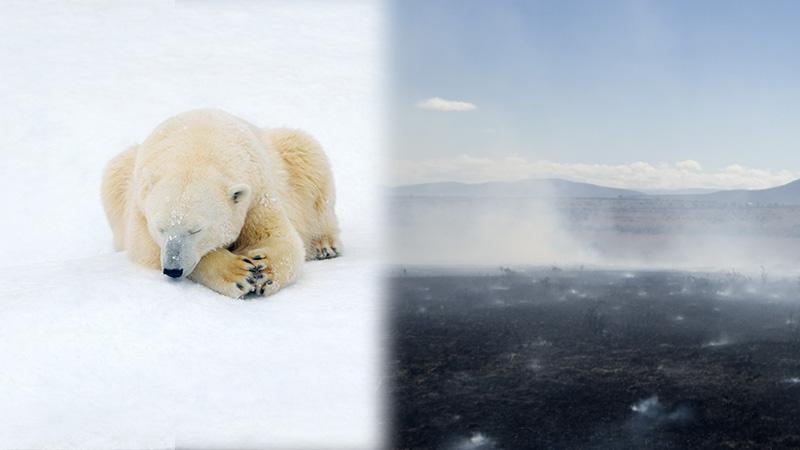 Siberia arctic is on fire heat wave alarms