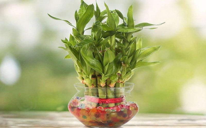 ઘરમાં વાવો આ છોડ, આવશે સુખ-સમૃદ્ઘિ