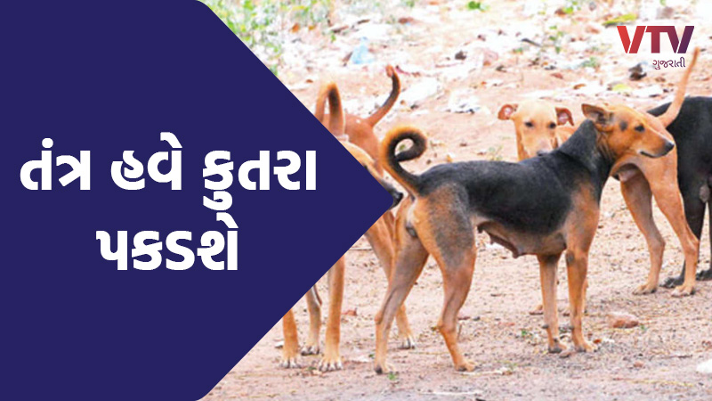 Thank You Trumpbhai This is you coming, so the stray dogs in our area