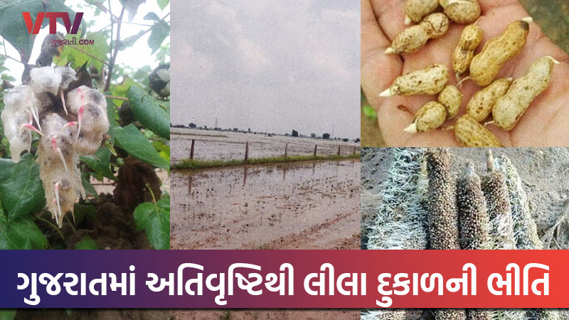 Gujarat plundered with 146% rain, crop failure depresses farmers in state
