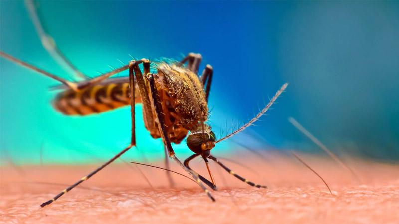 Gujarat Dengue Death Rajkot Surat Mehsana