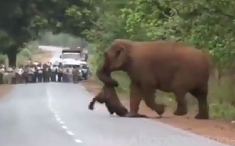 Elephant procession for funeral of child while weeping video goes viral
