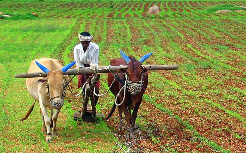 Modi government to increase msp for kharif crop