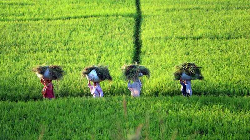 central government unique id of 12 digit farmers accessing agricultural schemes