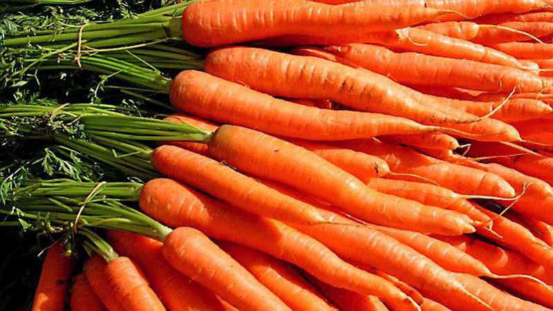 Best health benefits of eating carrot in winter