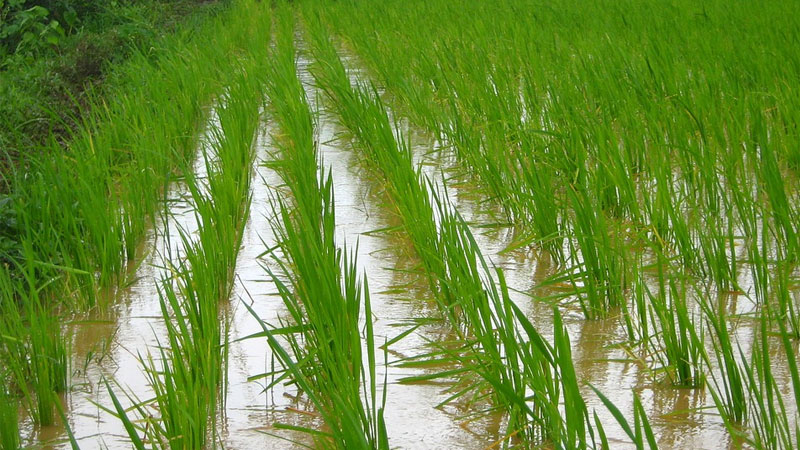 Gujarat Chapter 6.22 lakh hectares with kharif crops first in Kutch state