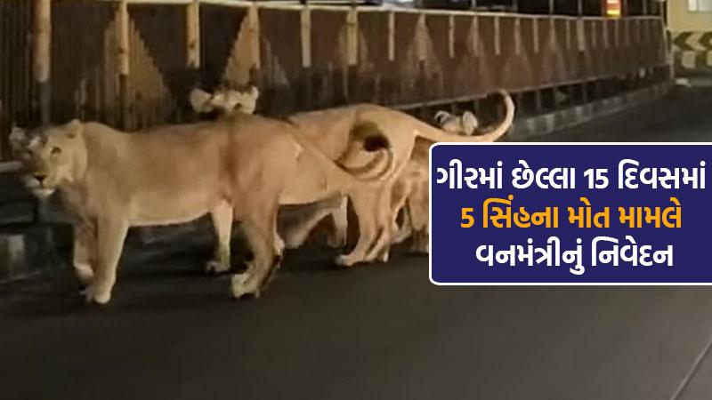 In case of death of 5 lions in last 15 days in Gujarat