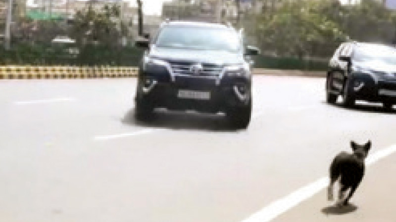 dog enters in prime minister convoy
