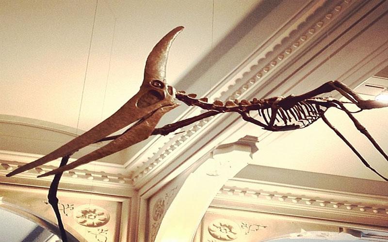 Pterodactyl dinosaur flying: Scientist survey