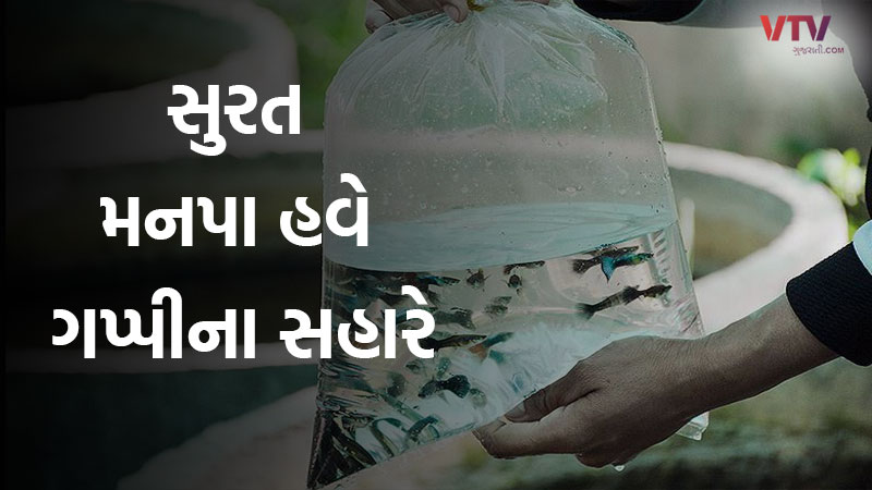 Surat Municipal Corporation will seek the help of guppy fish to fight the epidemic