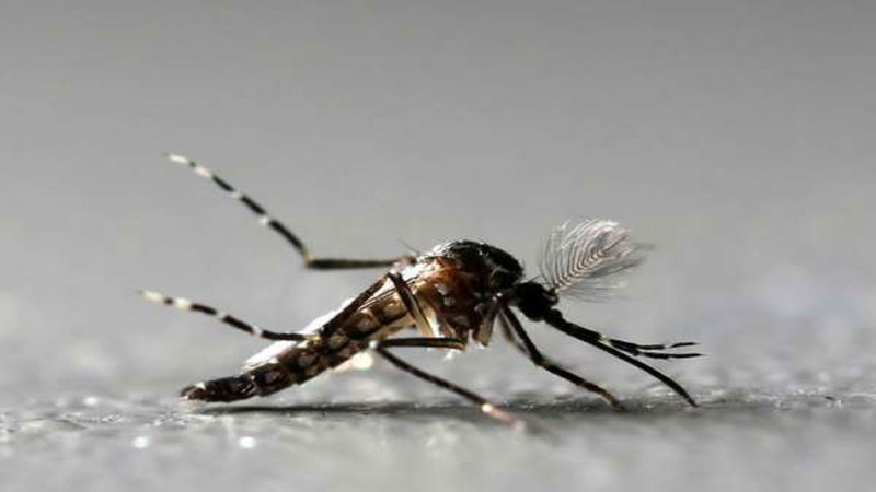 dengue case in ahmedabad 546 patient is hospitalized