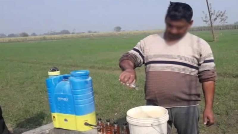 Gujarati farmer using alcohol to grow potato Cotton