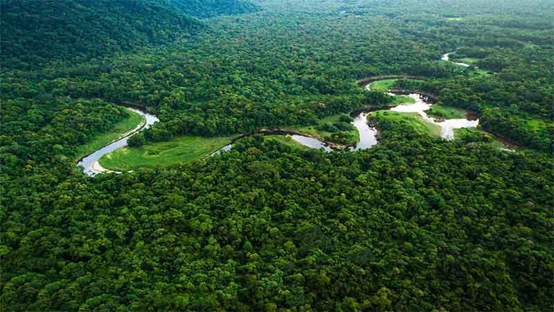 amazon rainforest could be next virus hot zone says brazilian ecologist david lapola