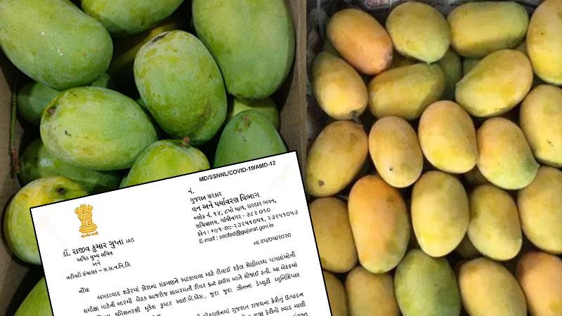 AMC mango selling center 26 may gmdc Ground vastrapur ahmedabad