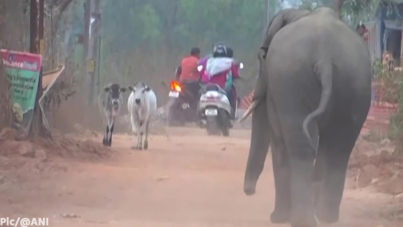 Four died three injure elephant attack residential areas bhuvneshwar