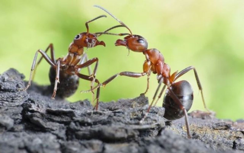 ants is symbol of good luck and wealth