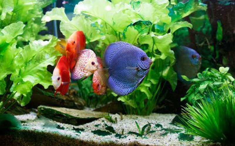 Vastu tips know how fish aquarium can be good for your house