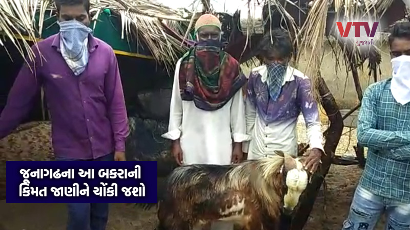 omg junagadh mangrol 7 lakhs Goat