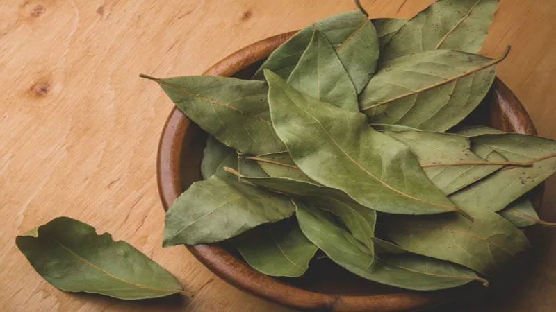 Burn bay leaf at home with this process and gets health benefits
