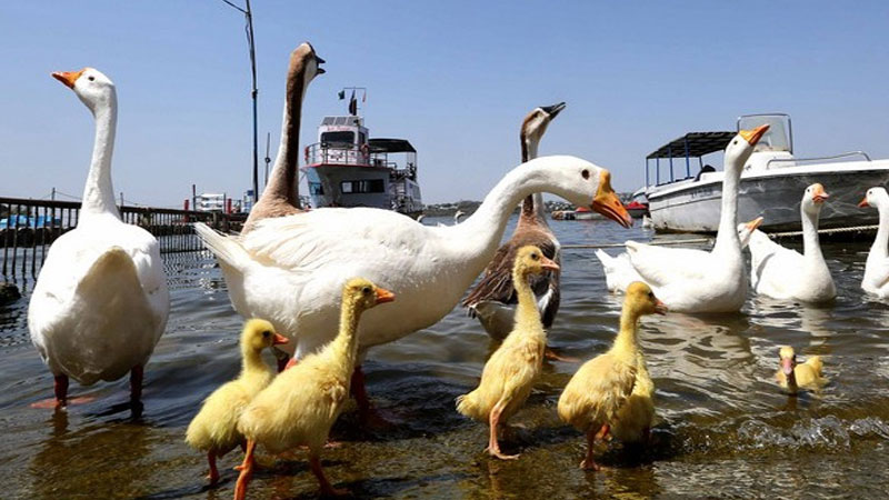 six states confirm bird flu cases unusual deaths of 16 birds in delhi