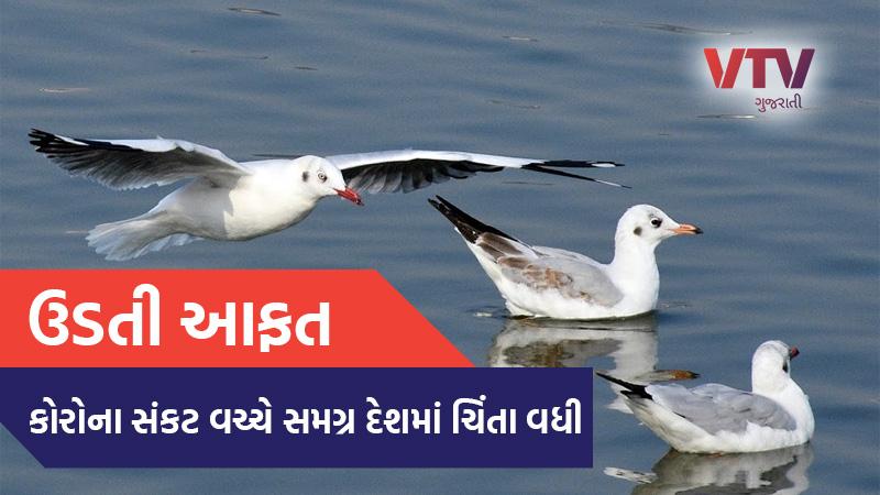 kerala government declared bird flu as state disaster