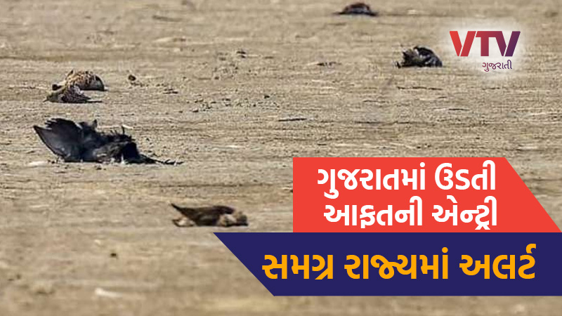 Bird Flu Has Not Hit Gujarat