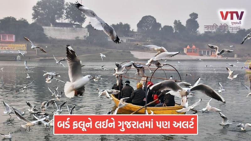 Bird flu gujarat government alert