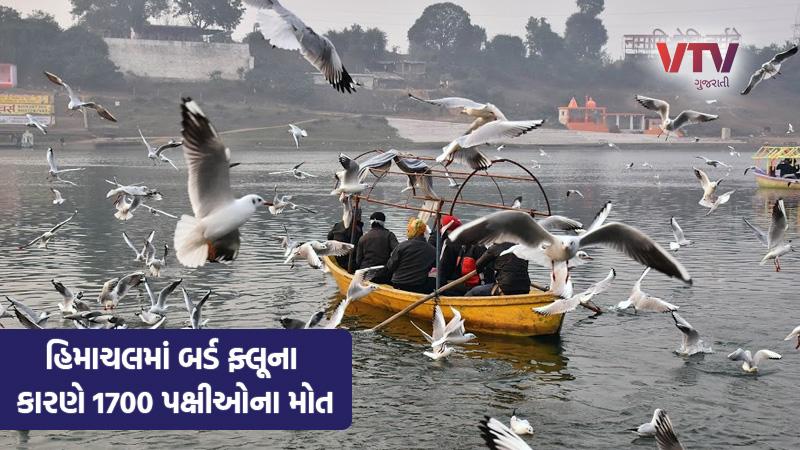 himachal pradesh bird flu migratory birds