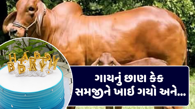 This person ate cow dung after understanding the cake