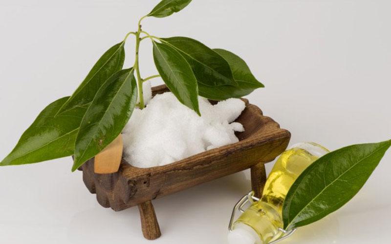 health surprising benefits of camphor essential oil