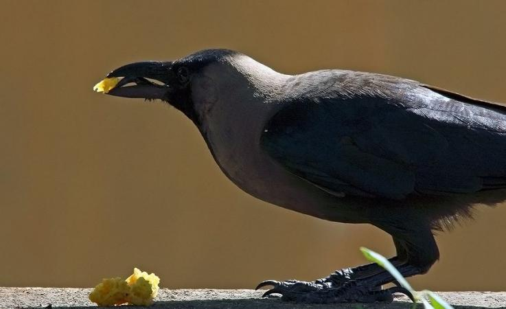 why crows are considered to be the form of ancestors during Pitru Paksha 2021
