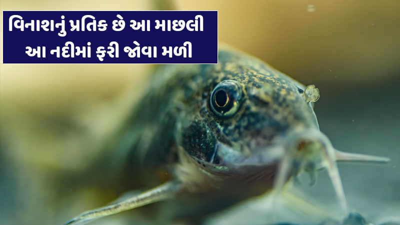 This dangerous fish found in Sindh after Ganga, scientists showed this serious danger