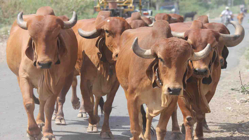 startup for cow dung and urine central government will give 60 percent fund